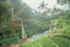 Bali Ubud Swing Tour - Gallery 100920192