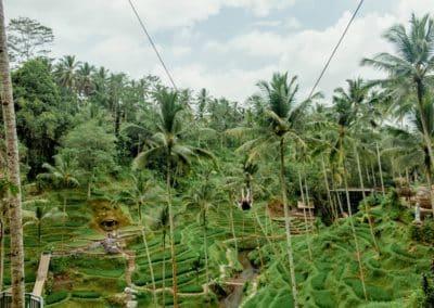 Bali Ubud Swing Tour - Gallery 1009201920