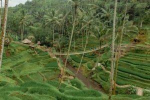 Bali Ubud Swing Tour - Gallery 100920196